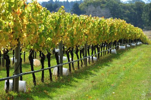 Bindi Winery