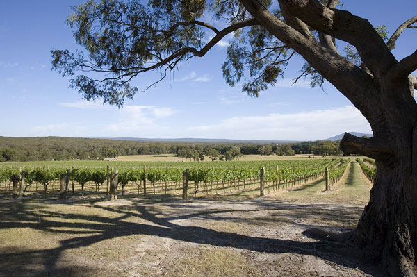 The Vineyard Bindi